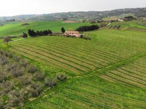 Pozzo-vivalpa-B&B-marche-ancona-serra-de-conti-senigallia-countryside-wine-olives-oil-italy